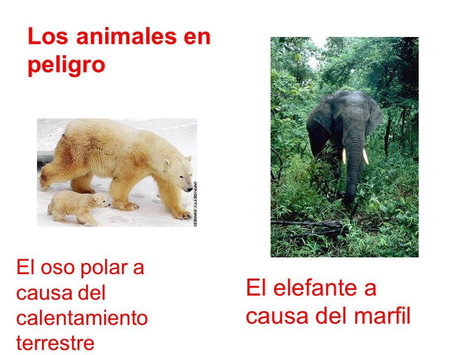 Los animales en peligro