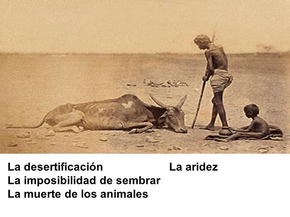 La desertificación La aridez