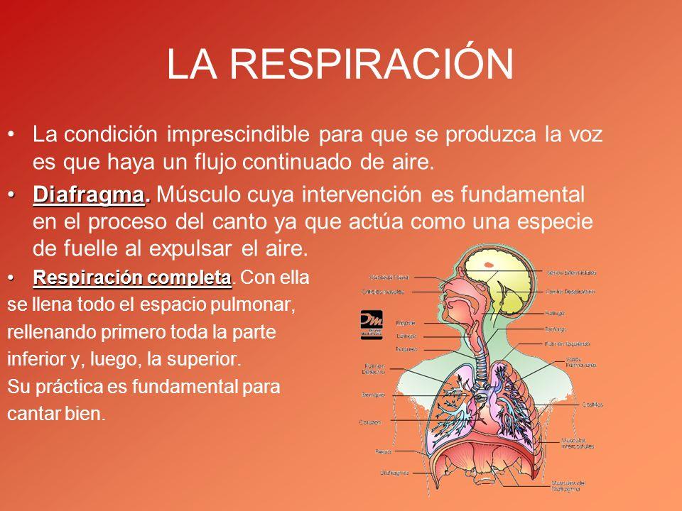 LA RESPIRACIÓN La condición imprescindible para que se produzca la voz es que haya un flujo continuado de aire.