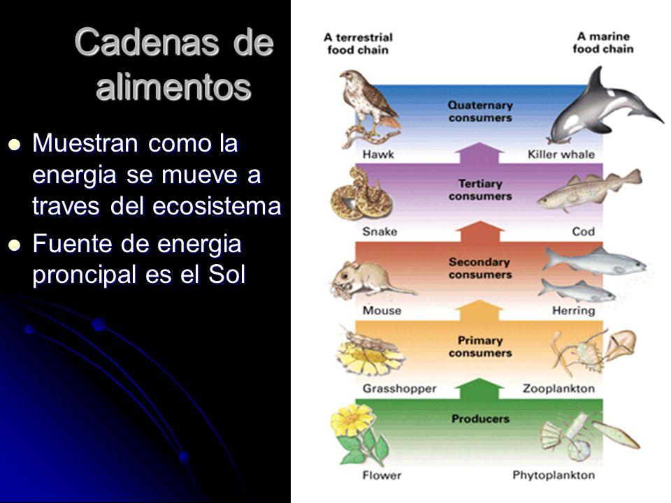 Cadenas de alimentos Muestran como la energia se mueve a traves del ecosistema.