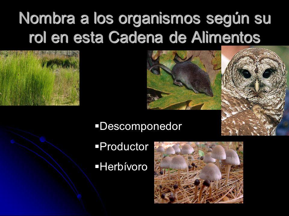 Nombra a los organismos según su rol en esta Cadena de Alimentos