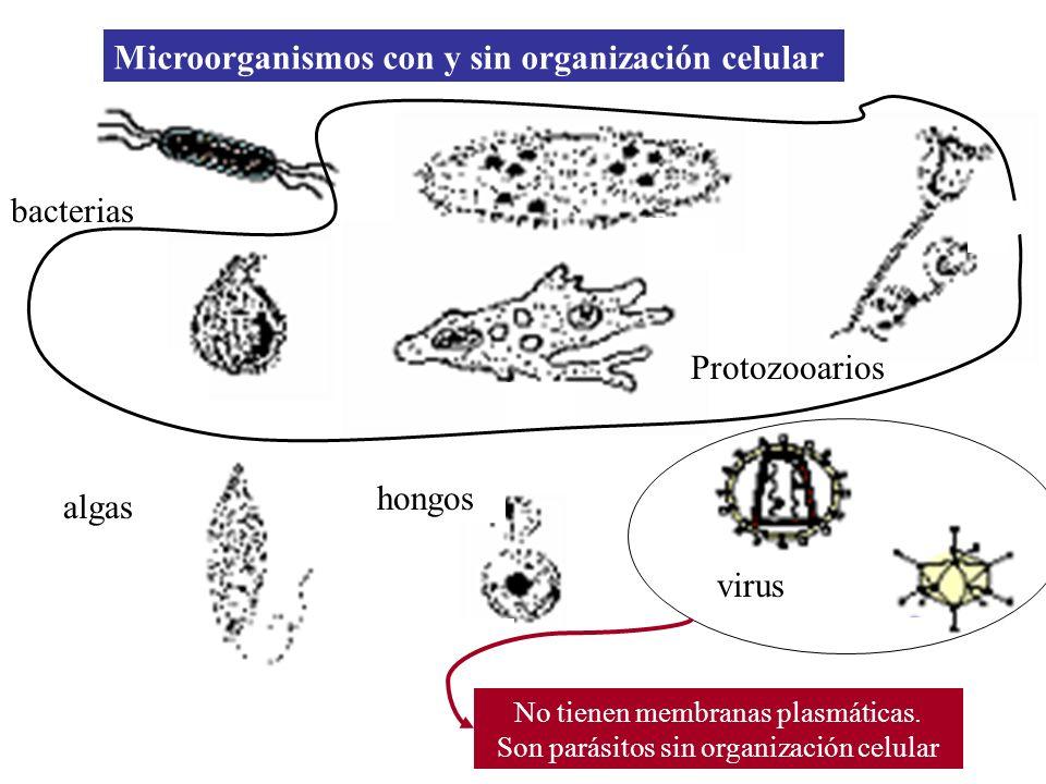 Microorganismos con y sin organización celular
