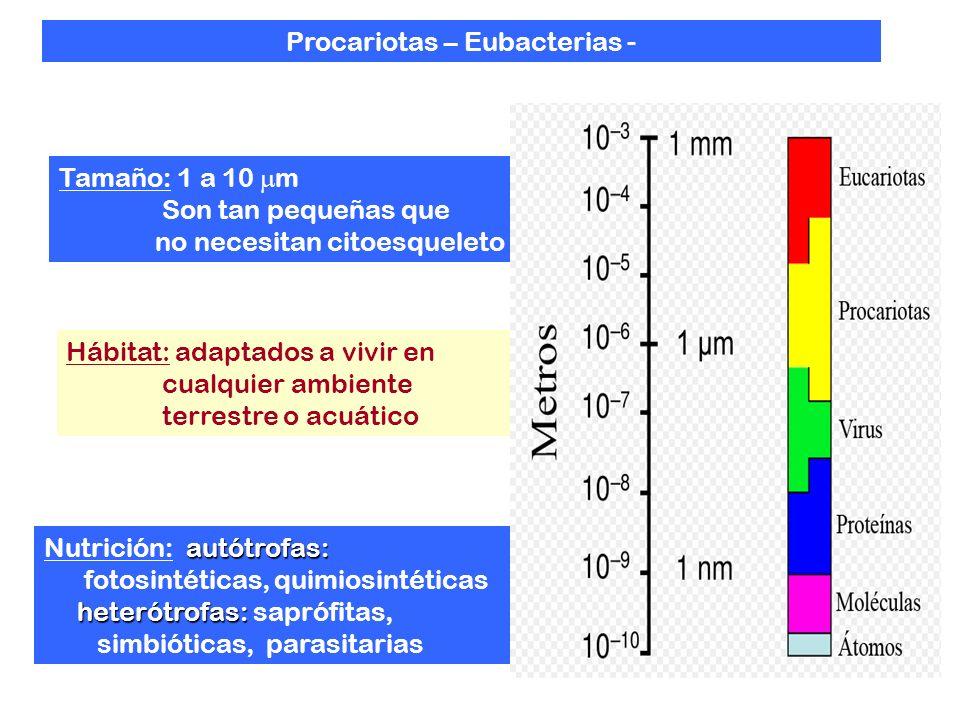 Procariotas – Eubacterias -