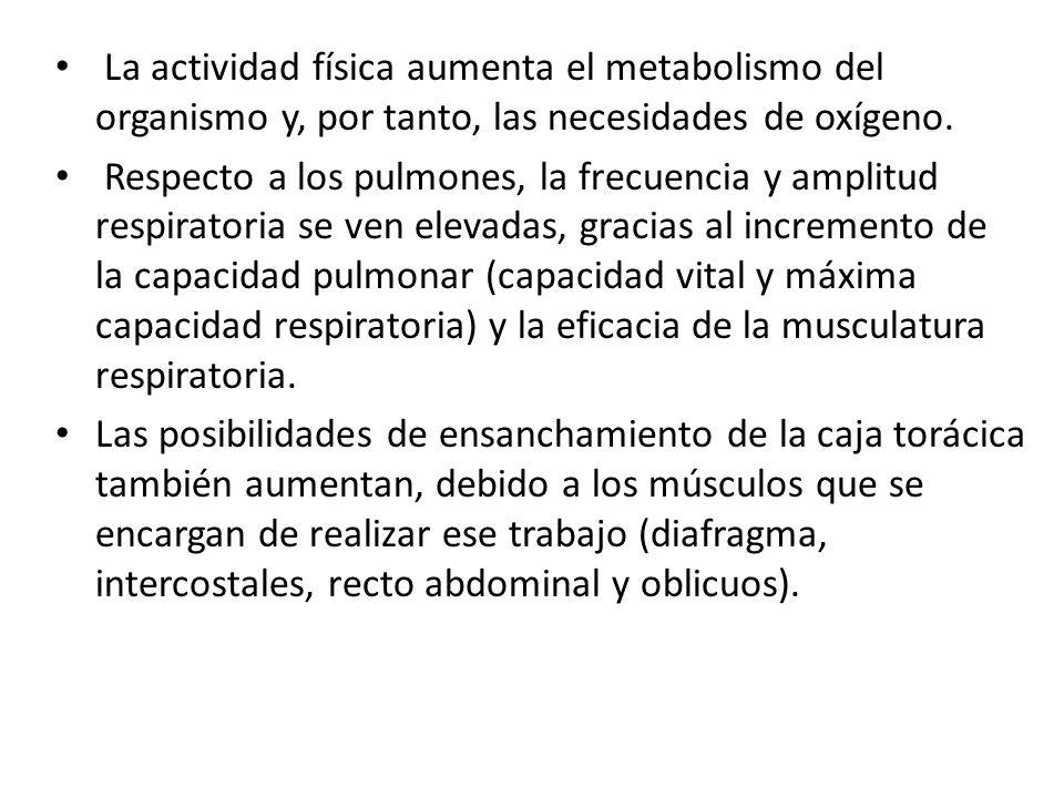 La actividad física aumenta el metabolismo del organismo y, por tanto, las necesidades de oxígeno.
