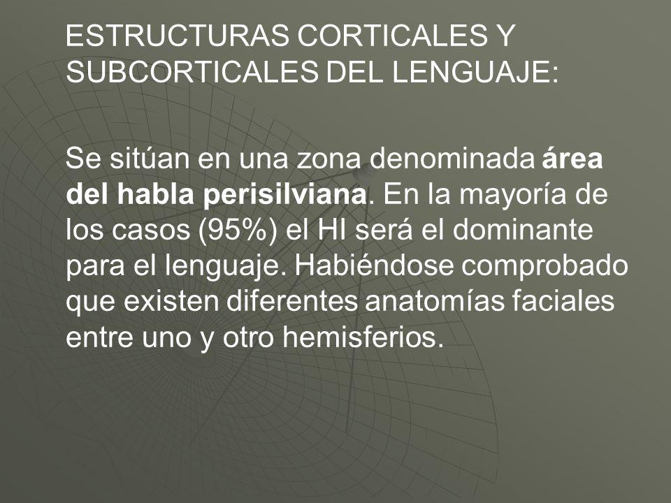ESTRUCTURAS CORTICALES Y SUBCORTICALES DEL LENGUAJE: