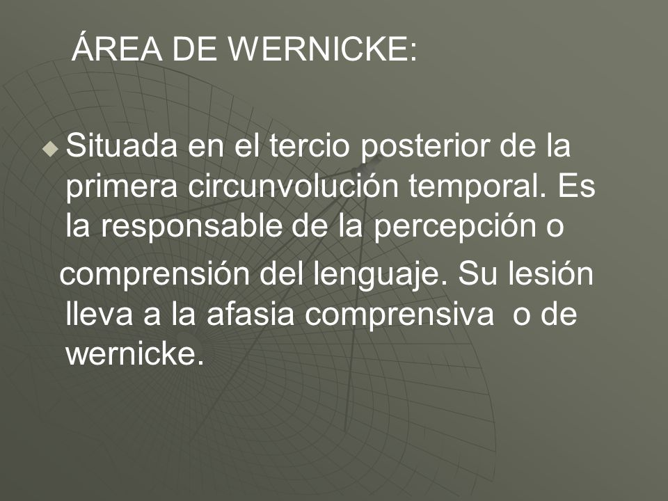 ÁREA DE WERNICKE: Situada en el tercio posterior de la primera circunvolución temporal. Es la responsable de la percepción o.