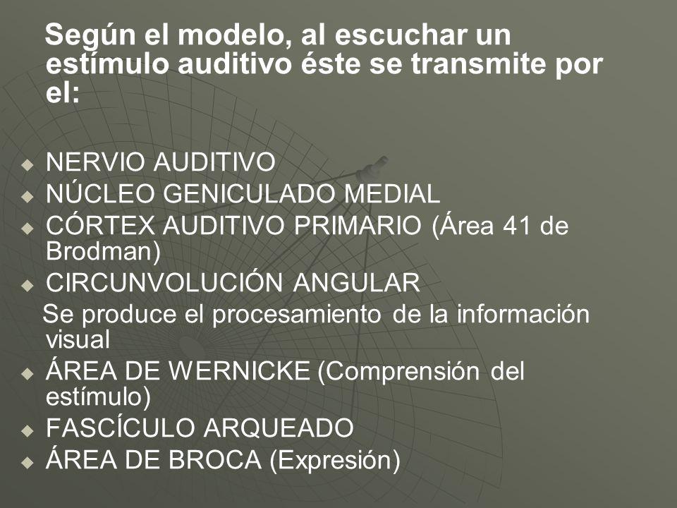 NÚCLEO GENICULADO MEDIAL CÓRTEX AUDITIVO PRIMARIO (Área 41 de Brodman)