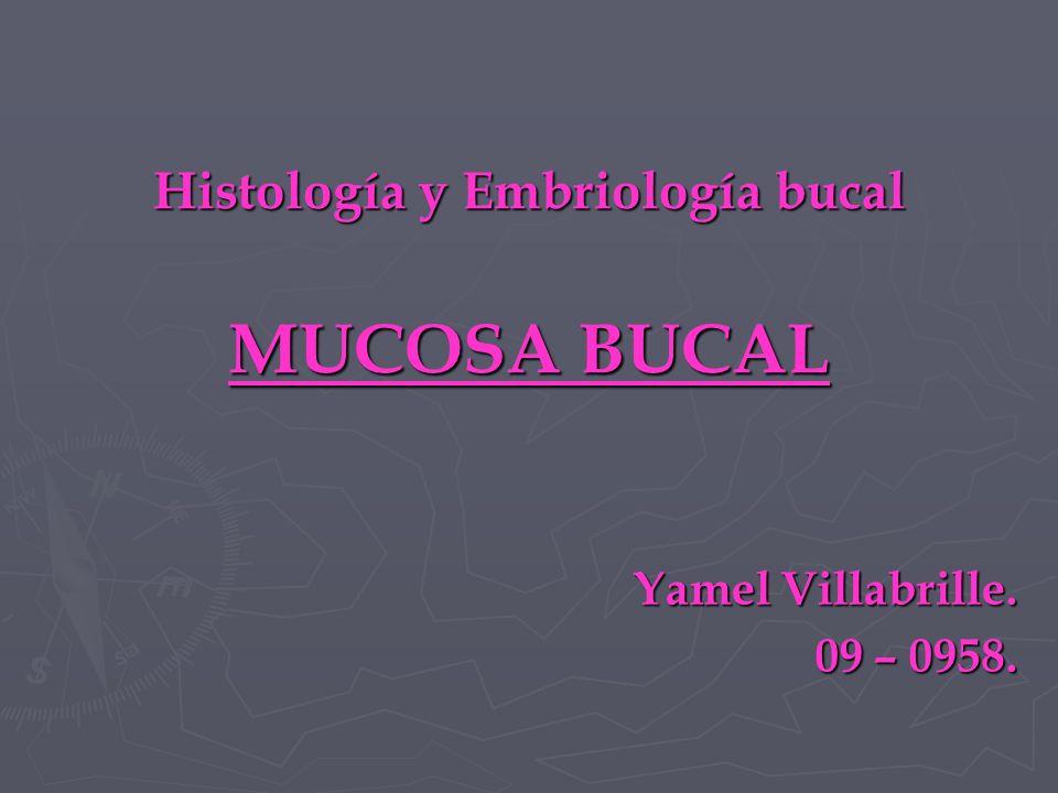 Histología y Embriología bucal MUCOSA BUCAL