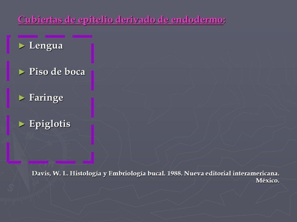 Cubiertas de epitelio derivado de endodermo: Lengua Piso de boca