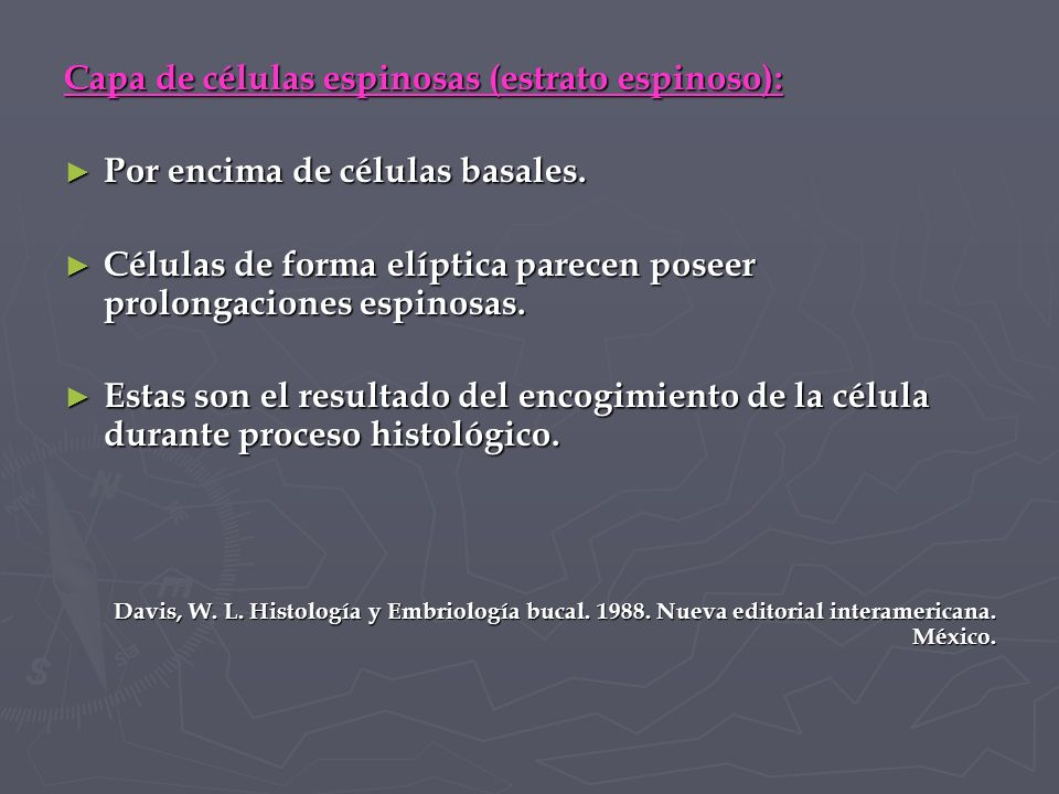 Capa de células espinosas (estrato espinoso):