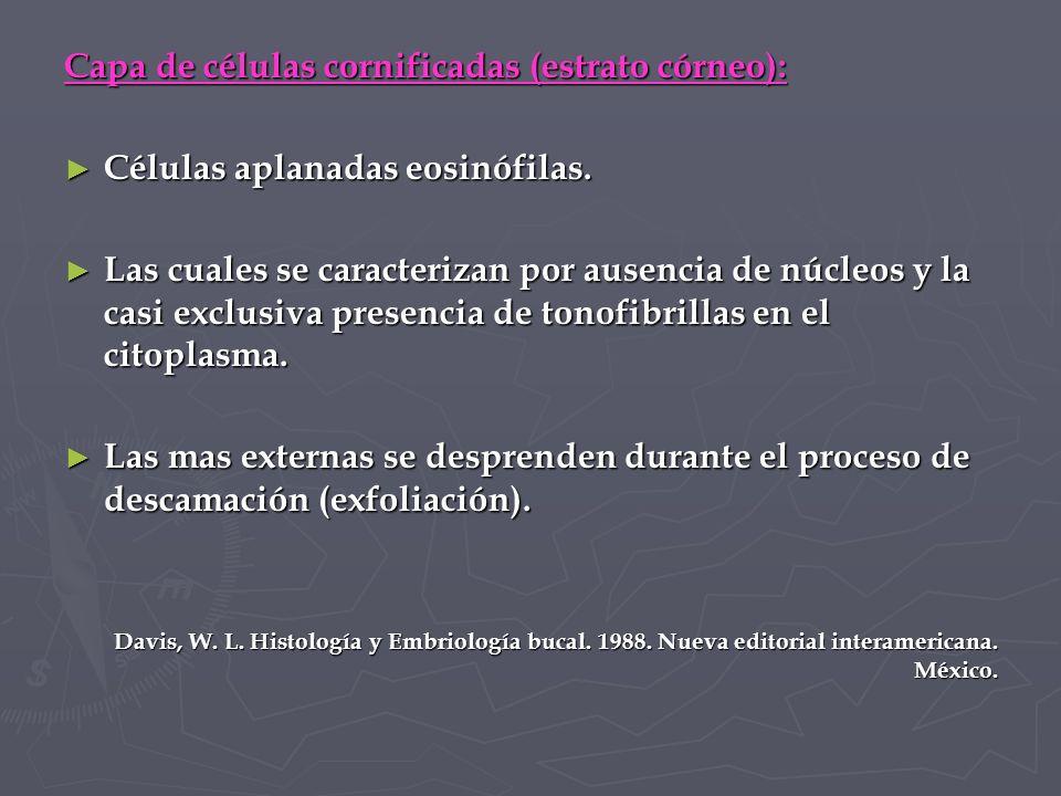 Capa de células cornificadas (estrato córneo):