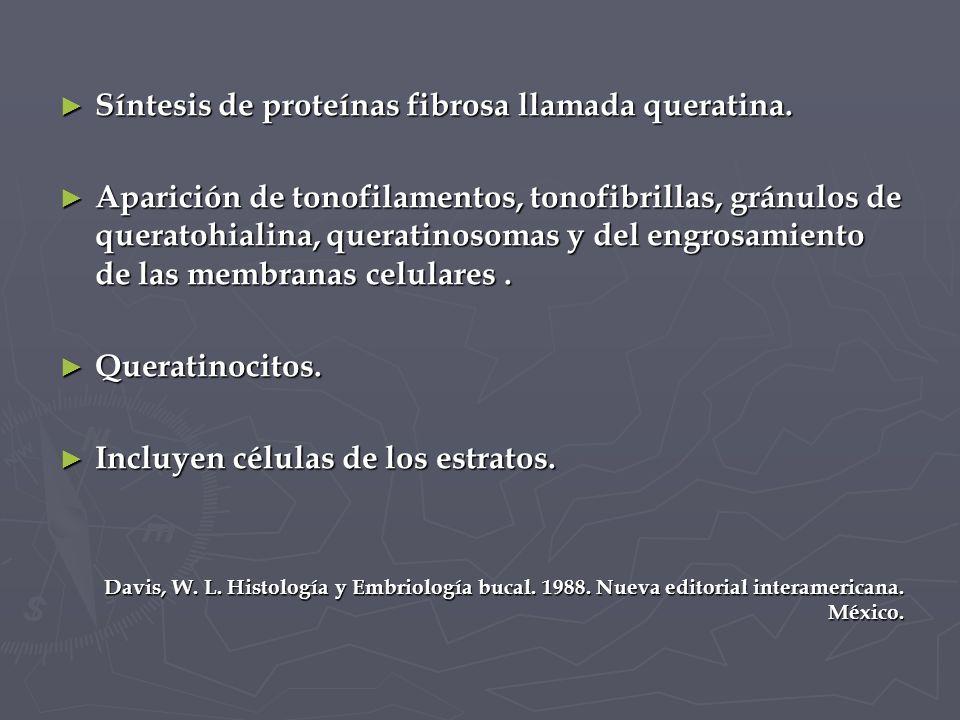 Síntesis de proteínas fibrosa llamada queratina.