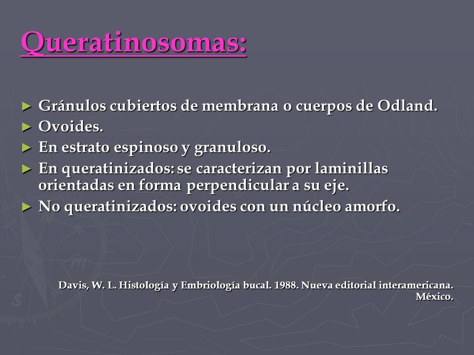 Queratinosomas: Gránulos cubiertos de membrana o cuerpos de Odland.