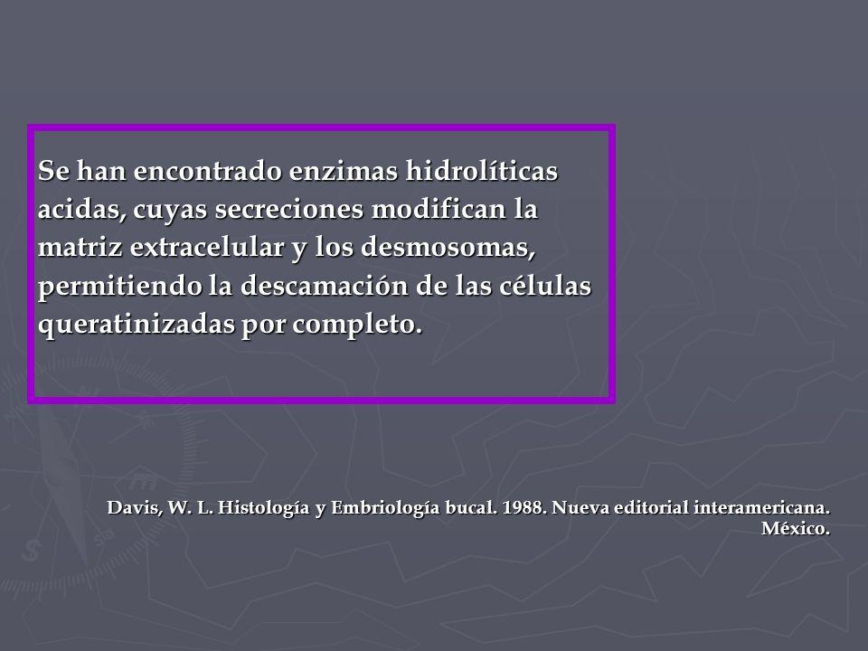 Se han encontrado enzimas hidrolíticas