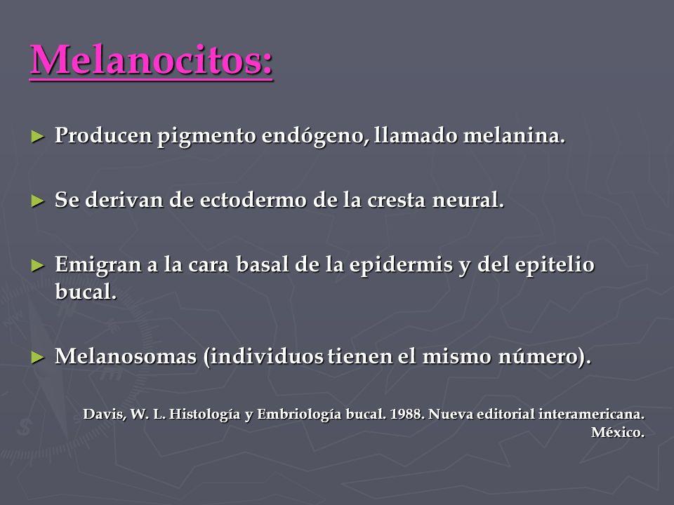 Melanocitos: Producen pigmento endógeno, llamado melanina.
