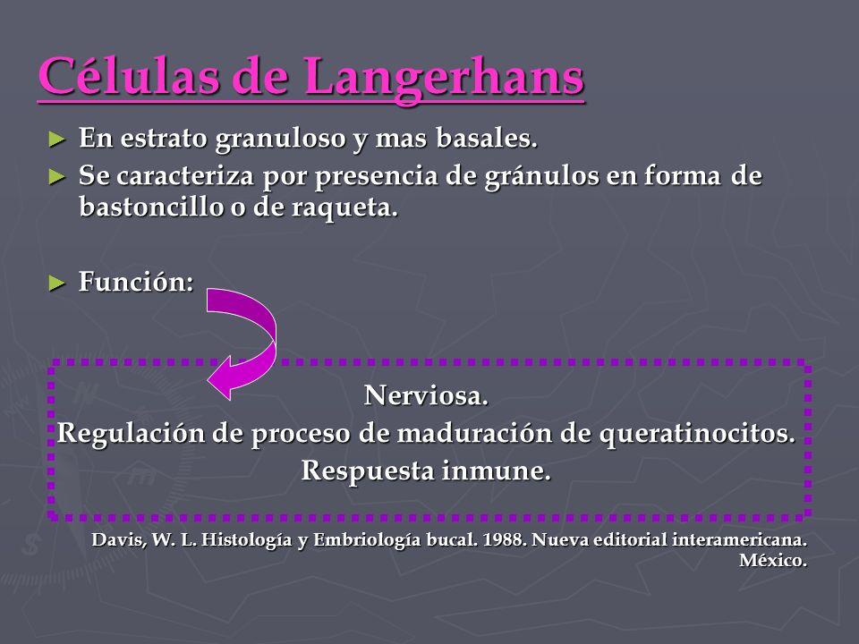 Regulación de proceso de maduración de queratinocitos.