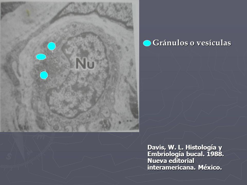 Gránulos o vesículas Davis, W. L. Histología y Embriología bucal.