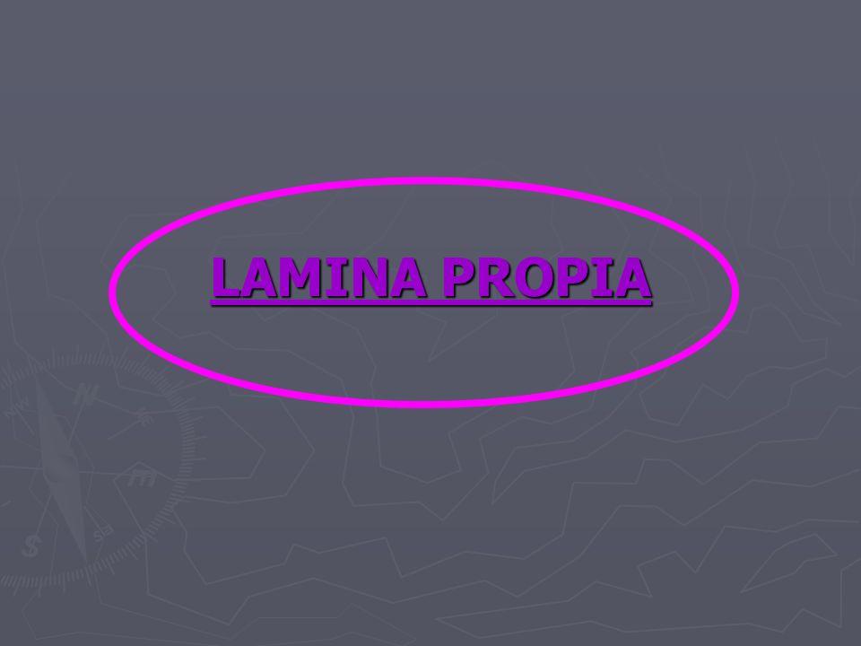 LAMINA PROPIA
