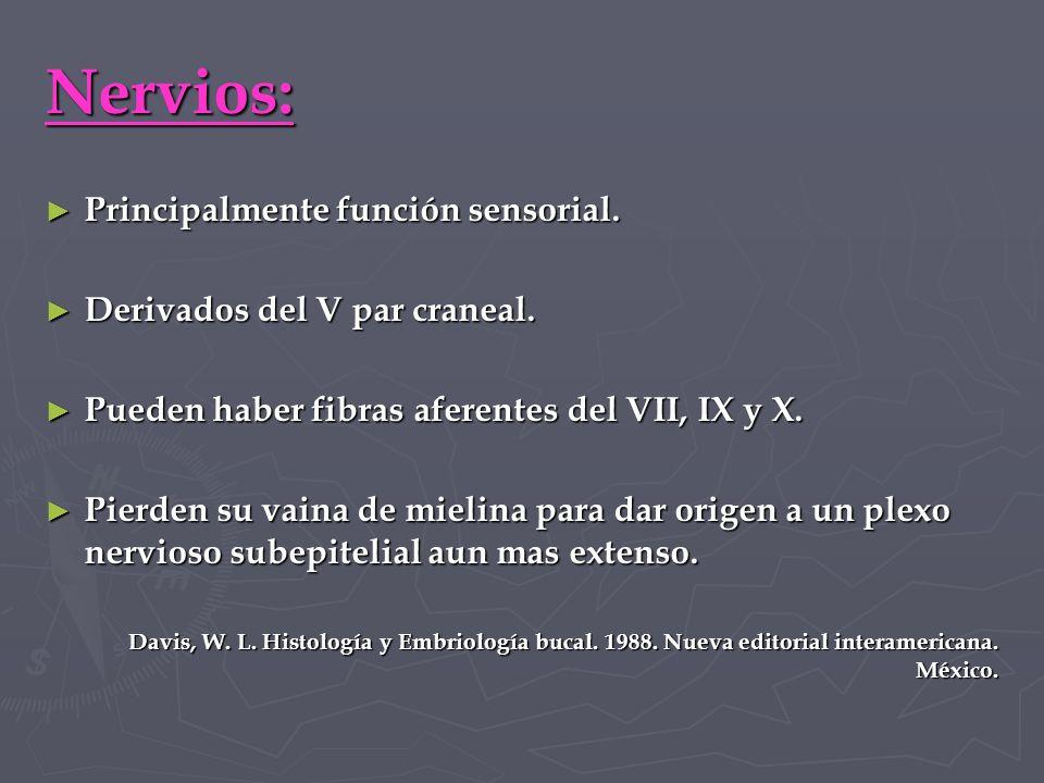 Nervios: Principalmente función sensorial.