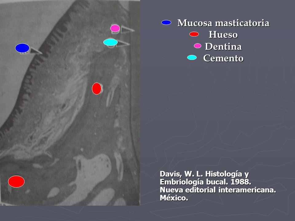 Mucosa masticatoria Hueso Dentina Cemento