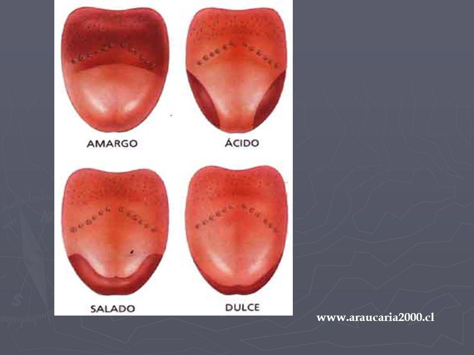 www.araucaria2000.cl