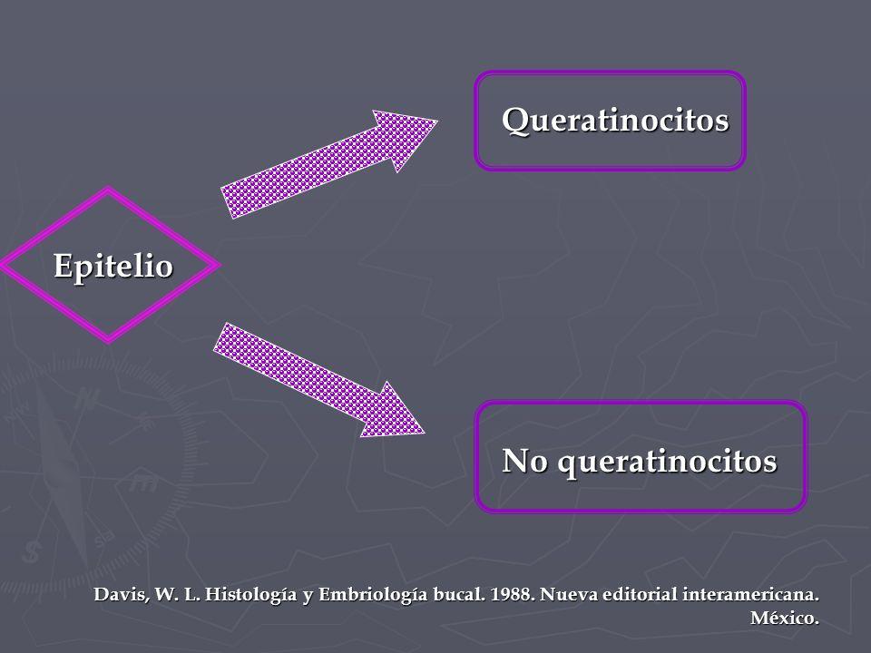 Queratinocitos Epitelio No queratinocitos