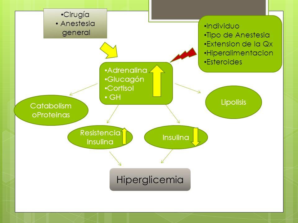 CatabolismoProteinas