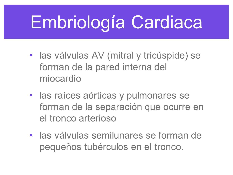 Embriología Cardiacalas válvulas AV (mitral y tricúspide) se forman de la pared interna del miocardio.