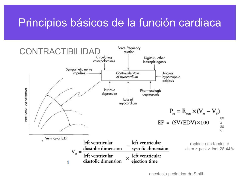 Principios básicos de la función cardiaca