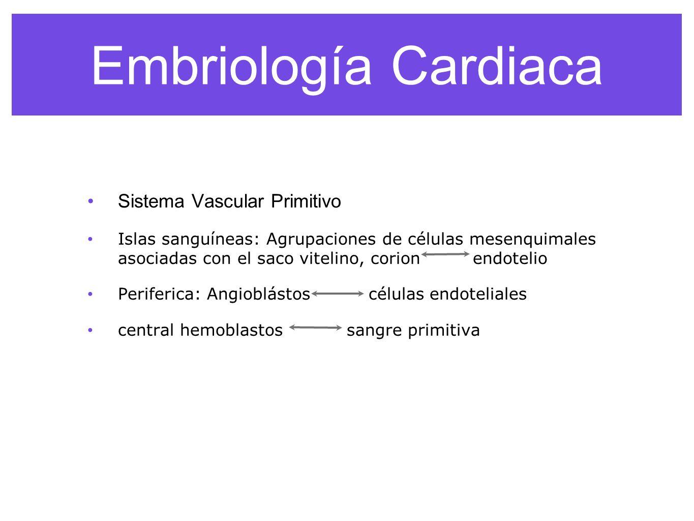 Embriología Cardiaca Sistema Vascular Primitivo