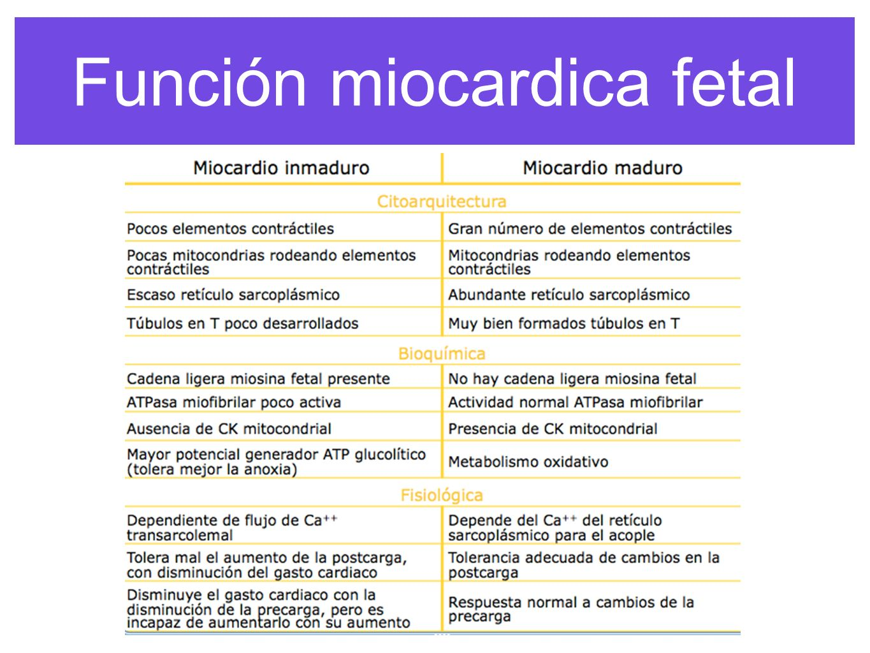 Función miocardica fetal