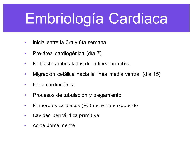 Embriología Cardiaca Inicia entre la 3ra y 6ta semana.
