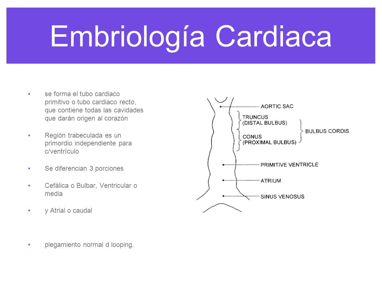 Embriología Cardiacase forma el tubo cardiaco primitivo o tubo cardiaco recto, que contiene todas las cavidades que darán origen al corazón.