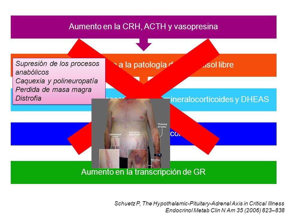 Aumento en la transcripción de GR Aumento en la vida ½ cortisol