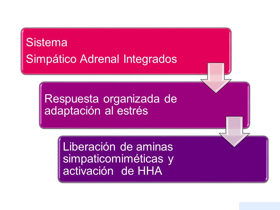Sistema Simpático Adrenal Integrados. Respuesta organizada de adaptación al estrés.