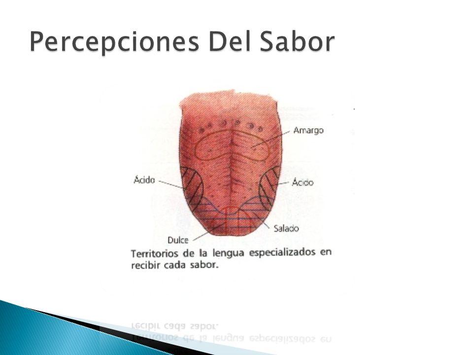Percepciones Del Sabor