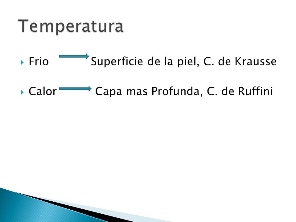 Temperatura Frio Superficie de la piel, C. de Krausse