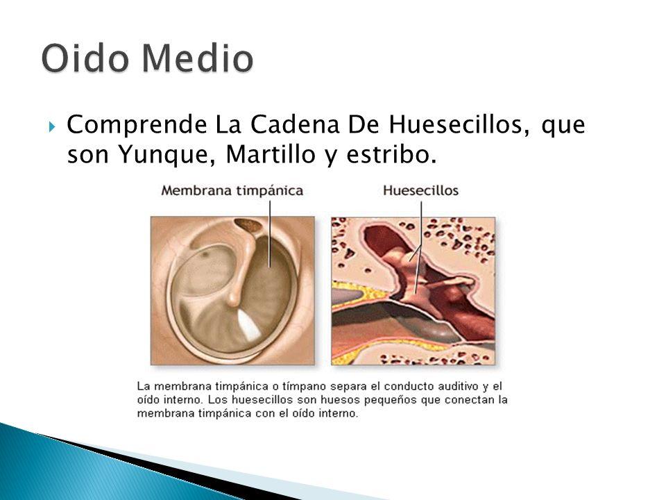 Oido Medio Comprende La Cadena De Huesecillos, que son Yunque, Martillo y estribo.