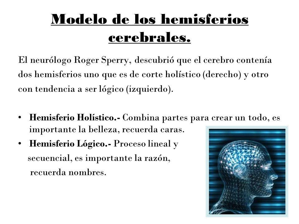 Modelo de los hemisferios cerebrales.