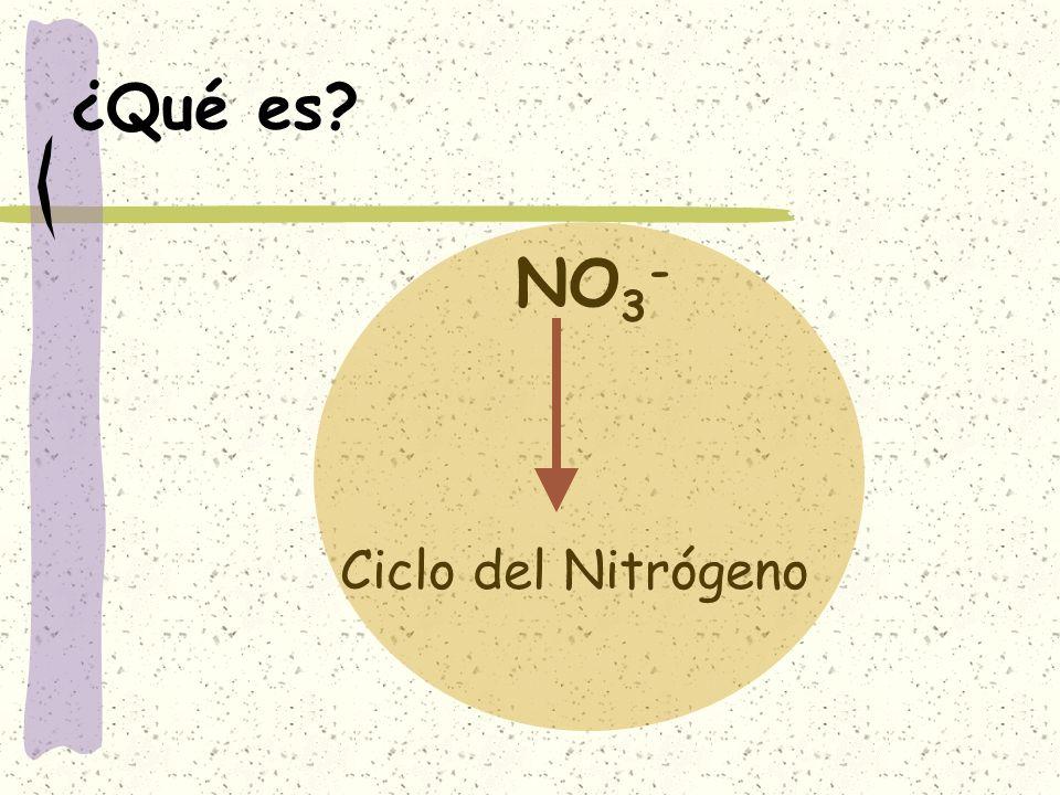¿Qué es NO3- Ciclo del Nitrógeno