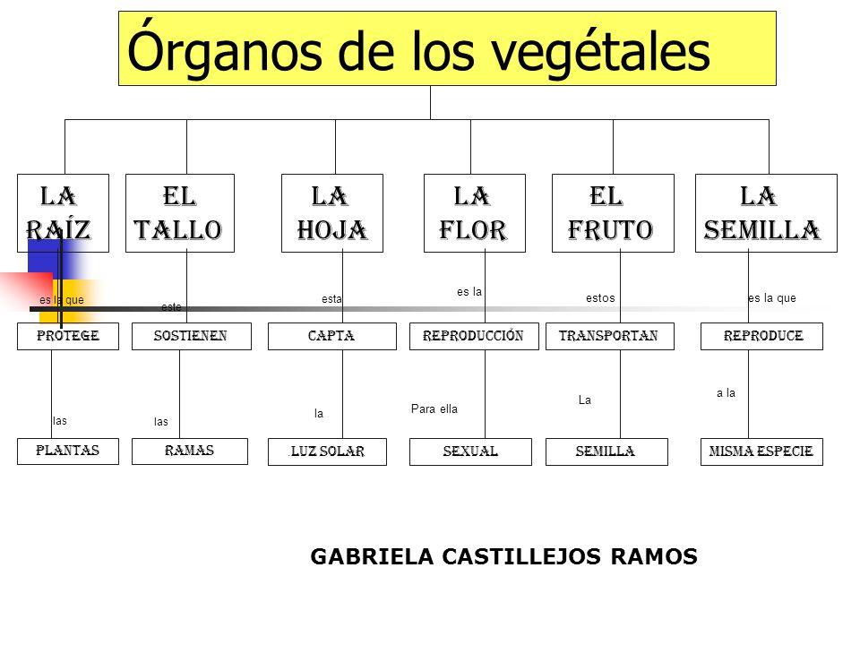 Órganos de los vegétales