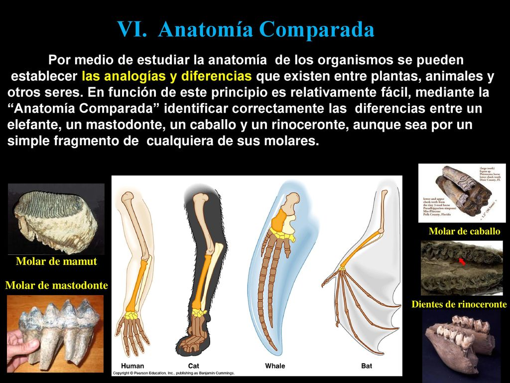 Único Hoja De Cálculo De La Anatomía Comparada Motivo - Imágenes de ...