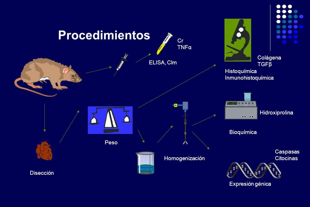 Procedimientos Cr TNFα Colágena TGFβ ELISA, Clm Histoquímica