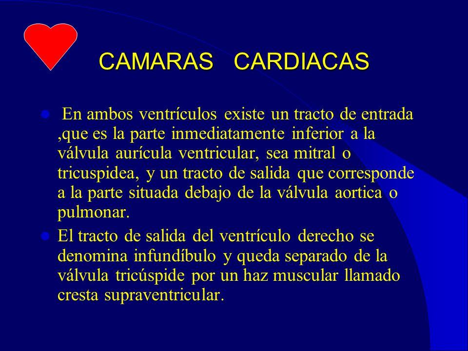CAMARAS CARDIACAS