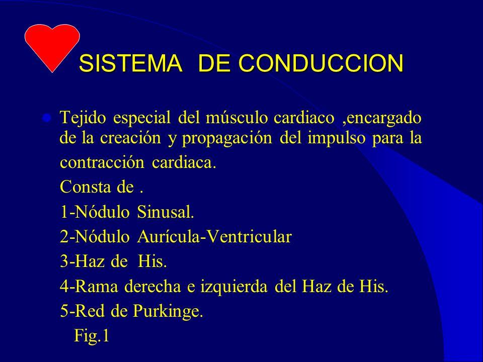 SISTEMA DE CONDUCCION Tejido especial del músculo cardiaco ,encargado de la creación y propagación del impulso para la.