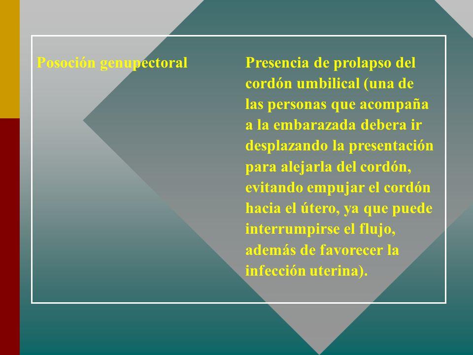 Posoción genupectoral Presencia de prolapso del