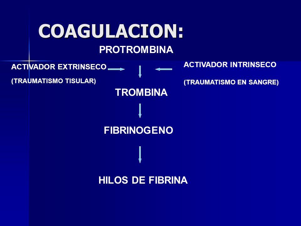 COAGULACION: PROTROMBINA TROMBINA FIBRINOGENO HILOS DE FIBRINA