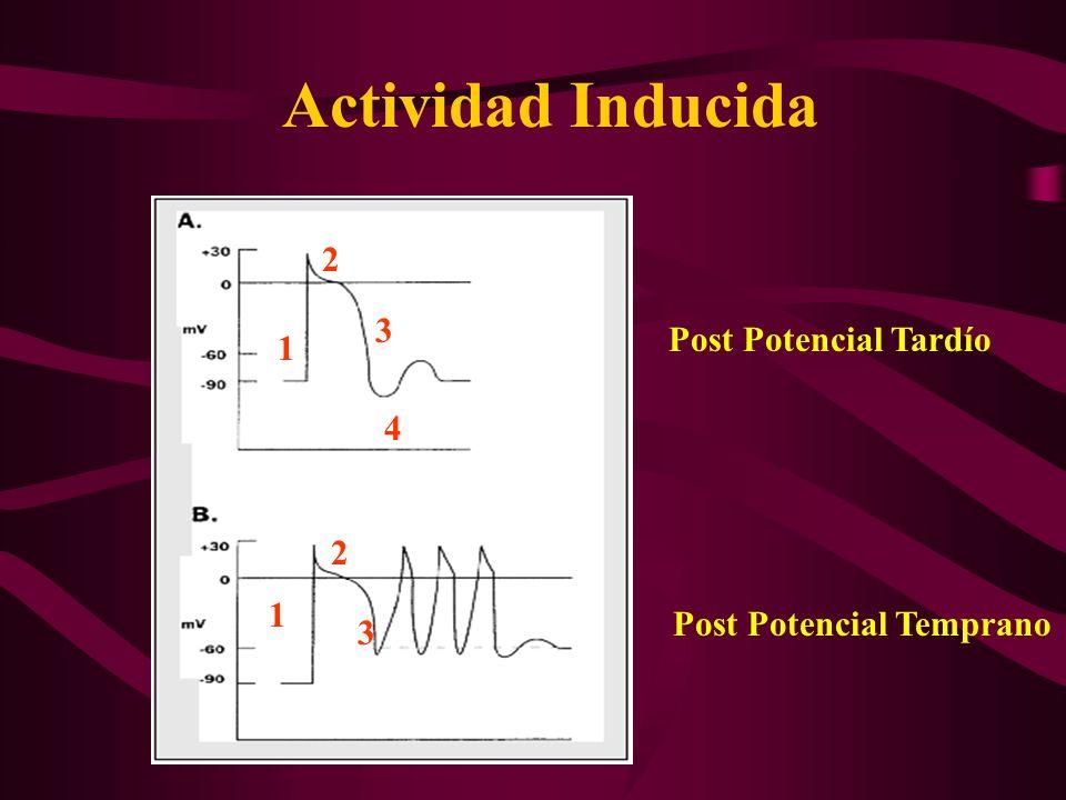Actividad Inducida 2 3 Post Potencial Tardío 1 4 2 1