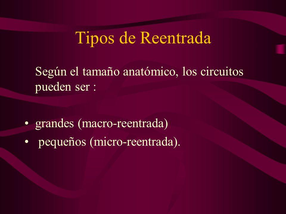 Tipos de ReentradaSegún el tamaño anatómico, los circuitos pueden ser : grandes (macro-reentrada) pequeños (micro-reentrada).