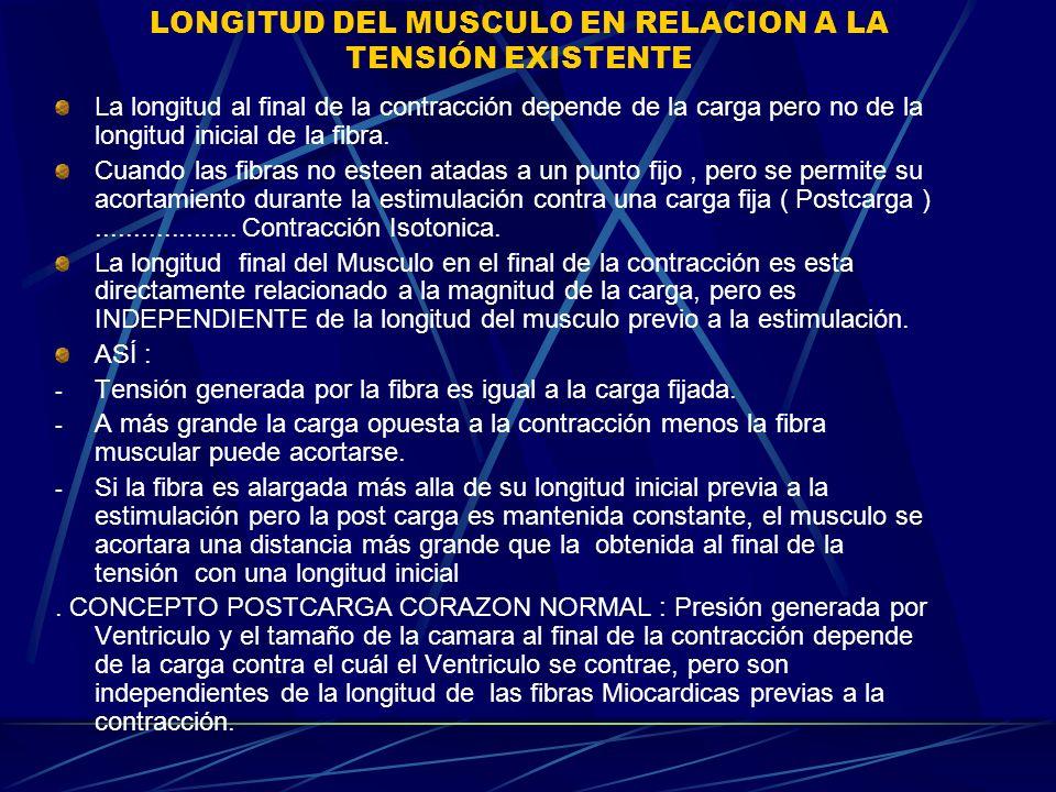 LONGITUD DEL MUSCULO EN RELACION A LA TENSIÓN EXISTENTE